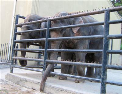 http://tbilisizoo.narod.ru/animals/034elefant.jpg